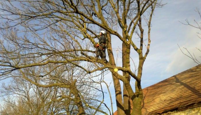 Prořezy stromů lezeckou technikou obr. 2