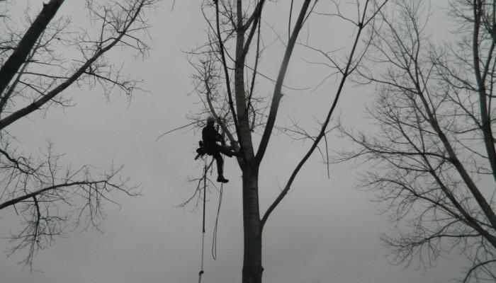 Prořezy stromů lezeckou technikou obr. 3
