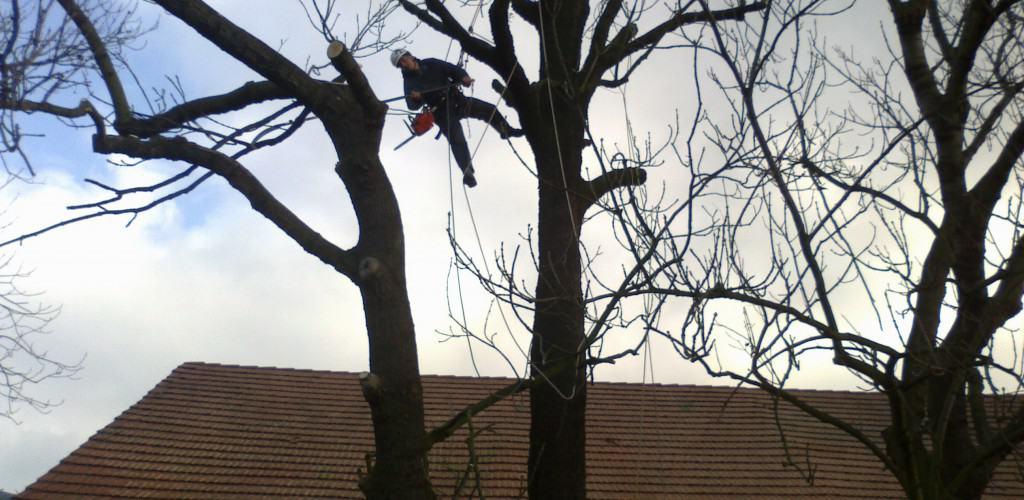 Prořezy stromů lezeckou technikou hlavní